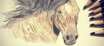 Best Books On Drawing Horses