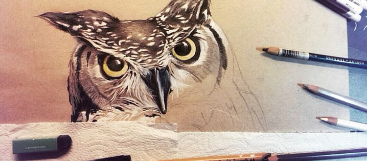 animal owl drawing