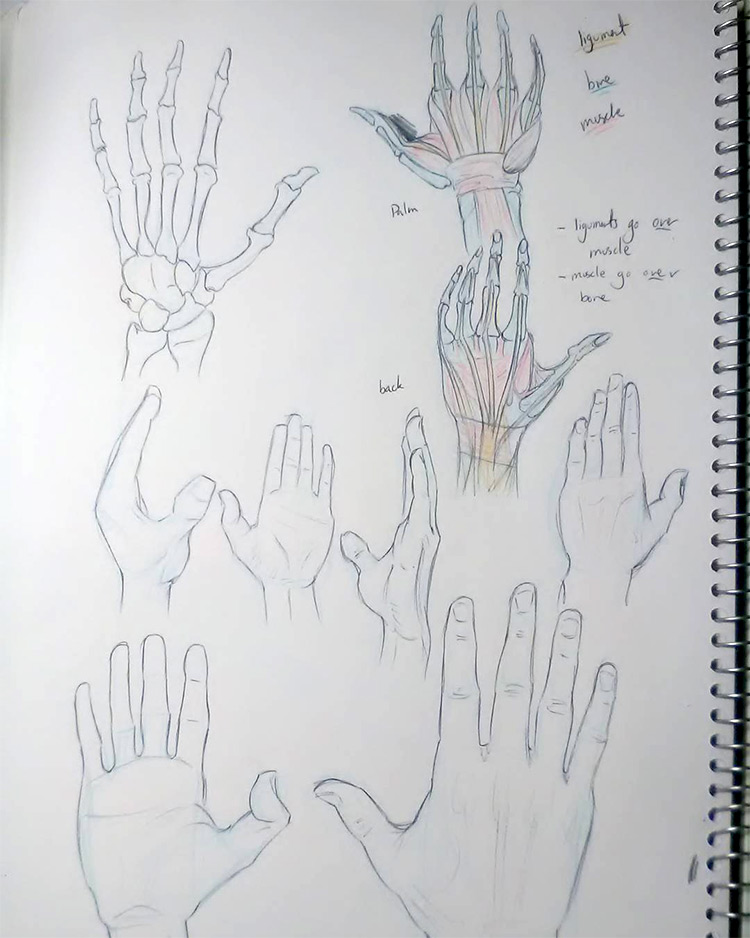 Drawing the hands and bones