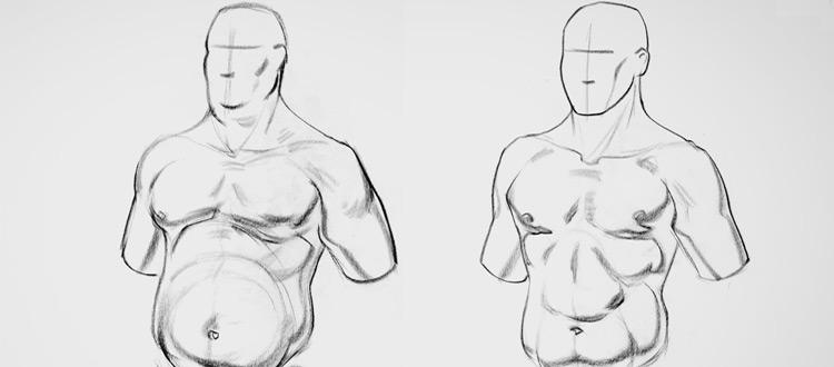 proko human anatomy