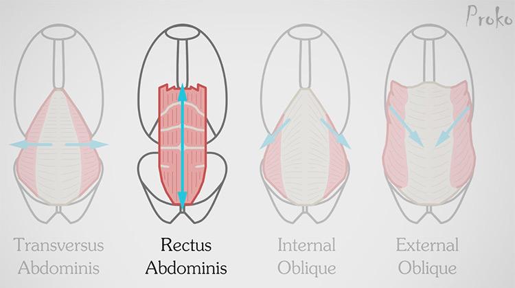 proko anatomy course preview