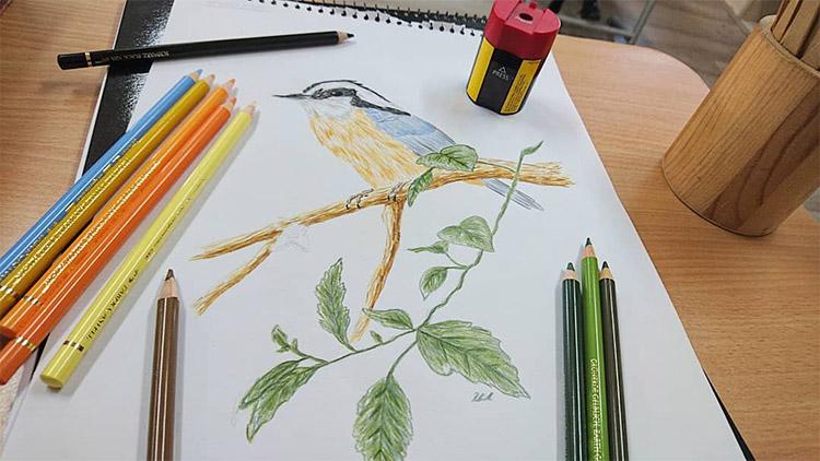 Sample watercolor pencil drawingbook
